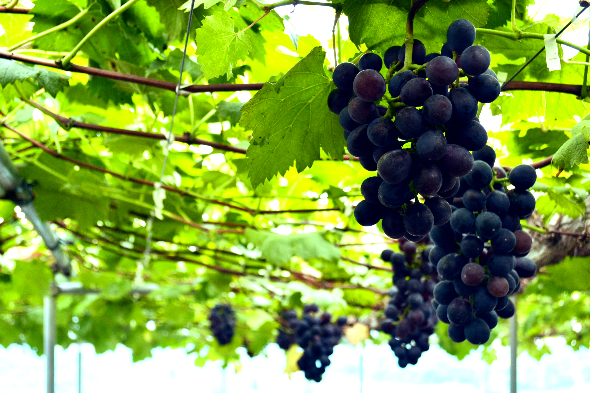 (c)httpwww.kyujin-times.netblogvegefulllife201204post-2.html